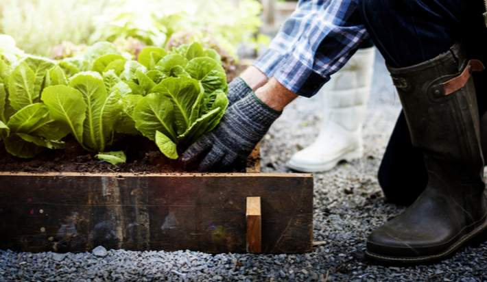Learn to Grow Your Own Food at Home